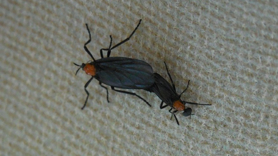 Where Do Love Bugs Come From? | INSECT COP