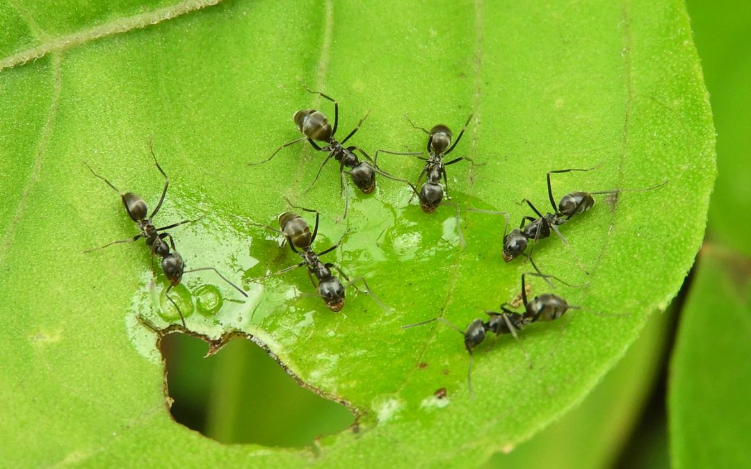 What Foods Do Ants Prefer