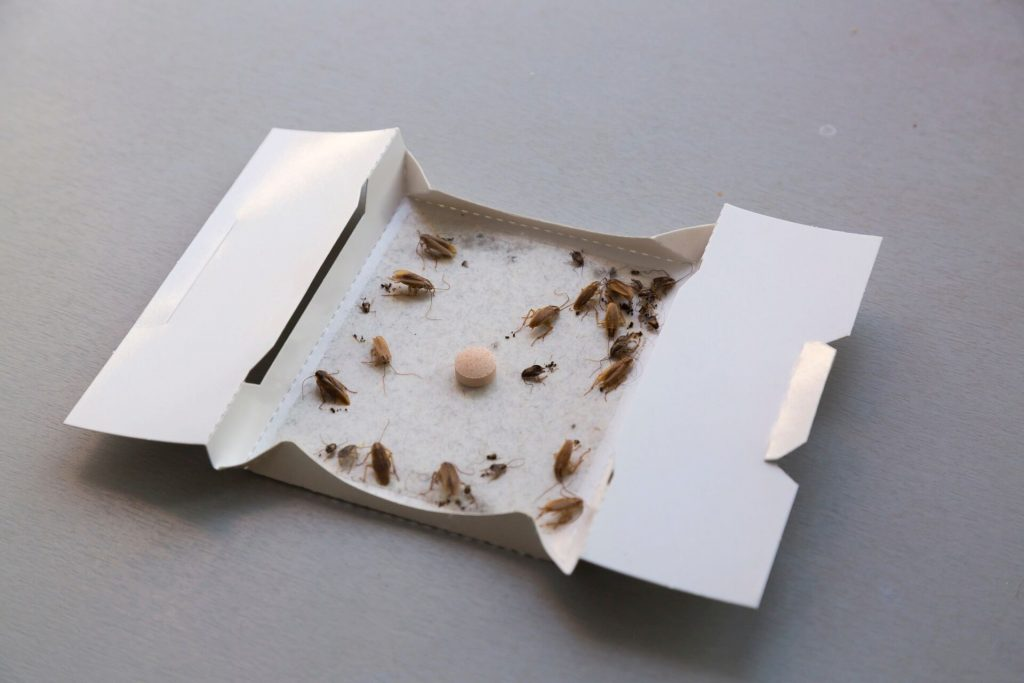 Glue traps for catching roaches