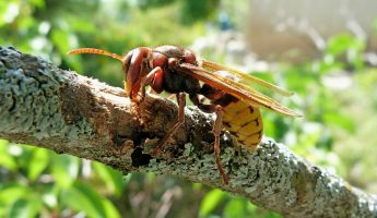 How to Treat Hornet Stings