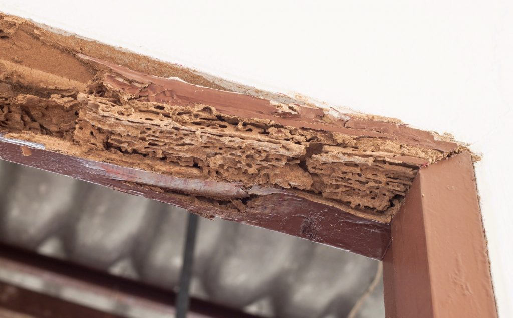 termite damage in the home