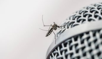 mosquito sitting on a microphone