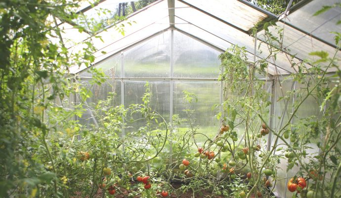 greenhouse insects