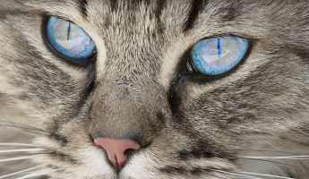 Rodenticide Poisoning in Cats