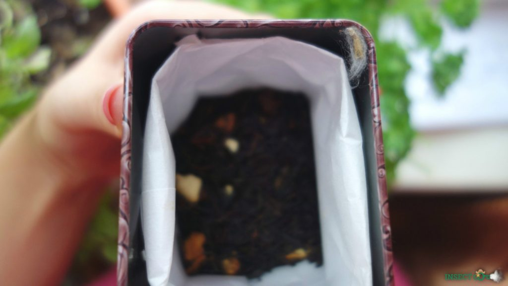 picture of pantry moth cocoon inside lidded tea storage box