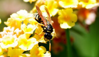 plants that attract wasps