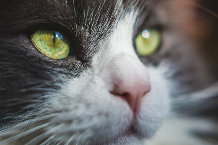 flea repelling plants safe for cats