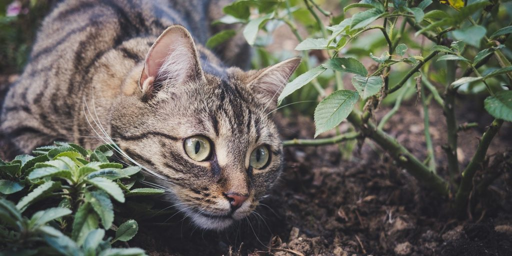 a cat with green eyes under a rose bush